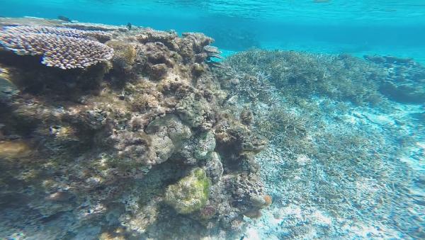 宮古島の珊瑚