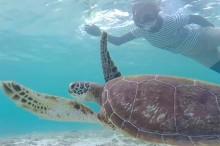 宮古島シギラビーチのウミガメ
