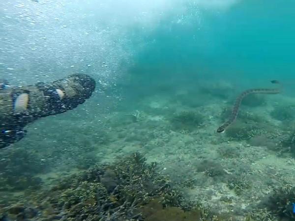 宮古島でウミヘビに遭遇