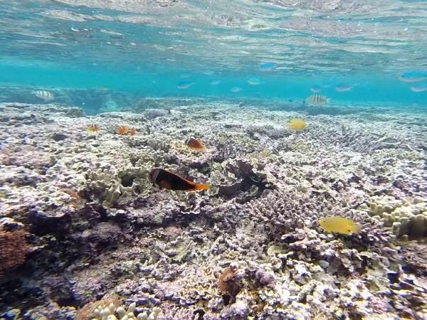 吉野海岸の珊瑚