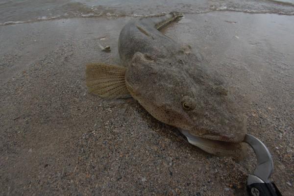 沖縄のコチ釣り